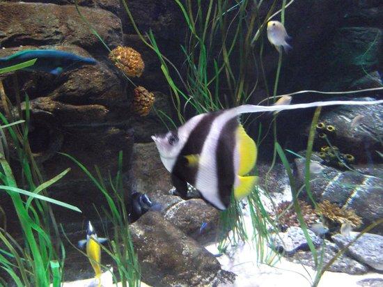 marta - Picture of Gardaland SEA LIFE Aquarium, Castelnuovo del Garda ...