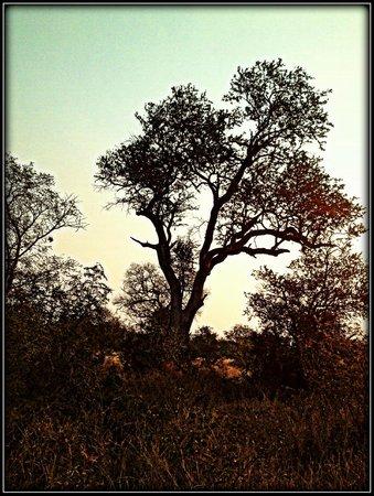 Africa on Foot Camp: Klesarie