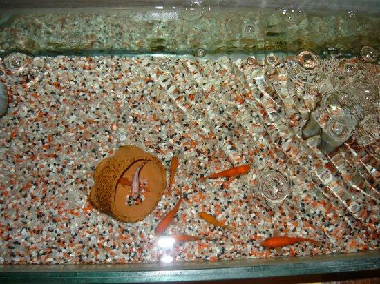 Albergo Diana : i pesci rossi