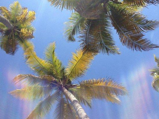Breeze Backwater Homes: hammock view