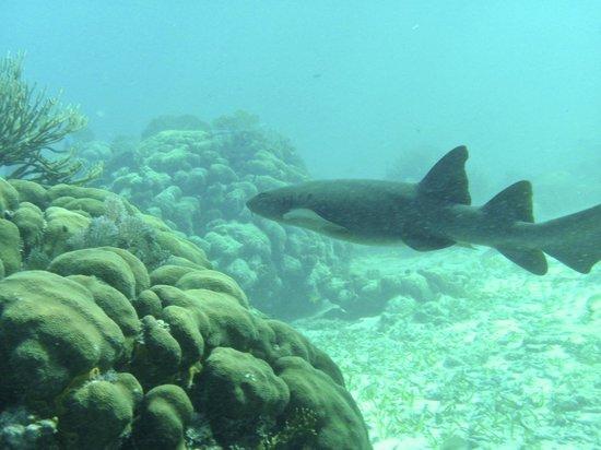 Victoria House: Shark Alley