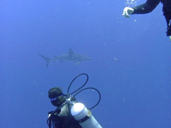 Victoria House: Watching the shark-Amigos Del Mar Blue Hole trip