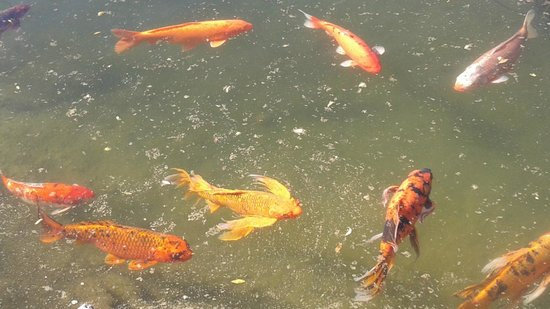 Barona Resort & Casino: Beautiful Fish