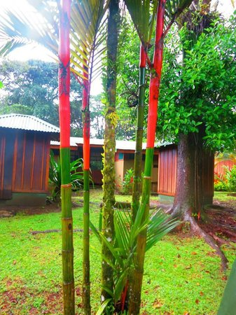 Mawamba Lodge: Cool flora at the lodges