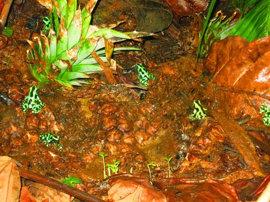 Mawamba Lodge: Frogs at the frog garden