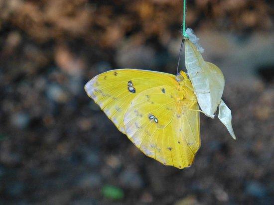 Hotel Cerro Lodge: Butterfly garden