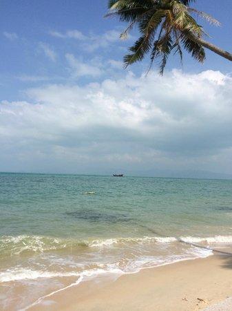 Mimosa Resort & Spa: beach