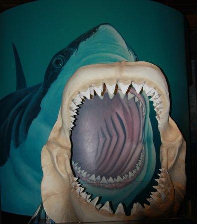 Megaladon! Oregon Coast Aquarium