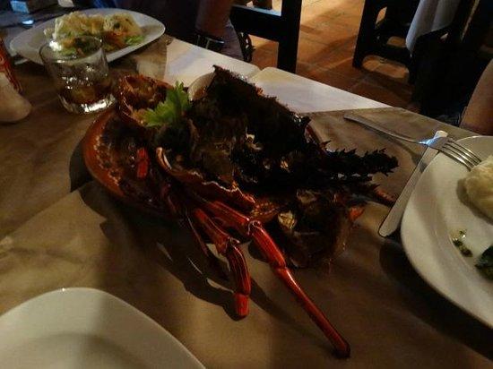 Tierra Viva : Lobster