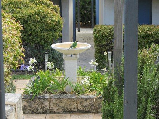 Surfpoint Resort: Courtyard Garden