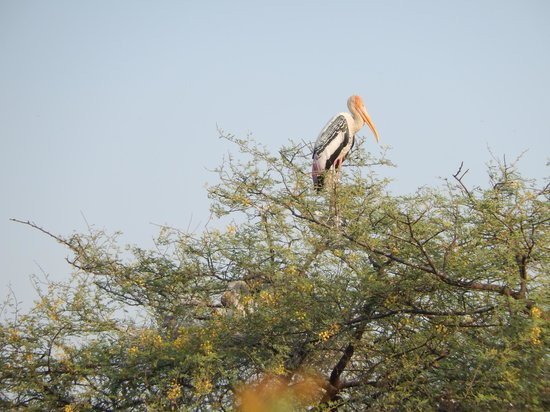 Keoladeo National Park : Lonely at the top