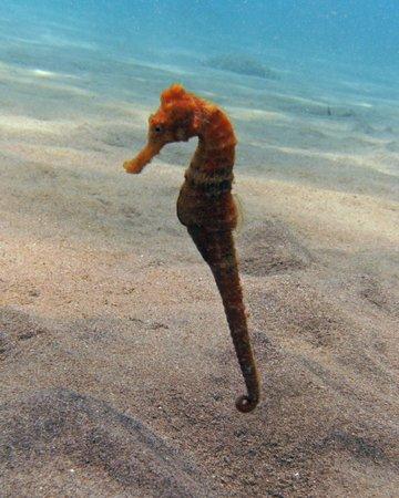ALDive & W.A.T.E.R Sports : Seahorse