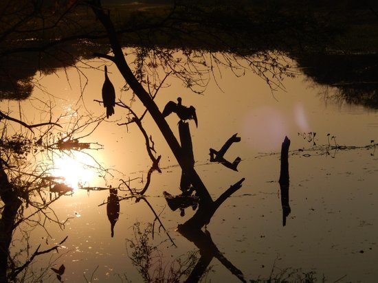 Keoladeo National Park : Another view of the sunset, note the reflection in the still water