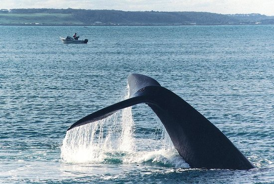 Centreport Units: Whales play