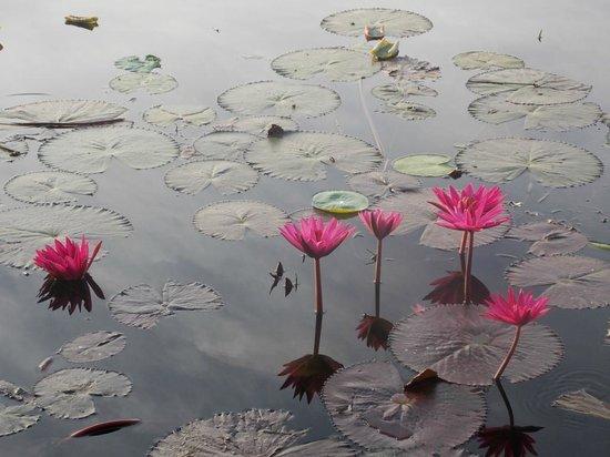 Mahawewa Nature Resort: Lake
