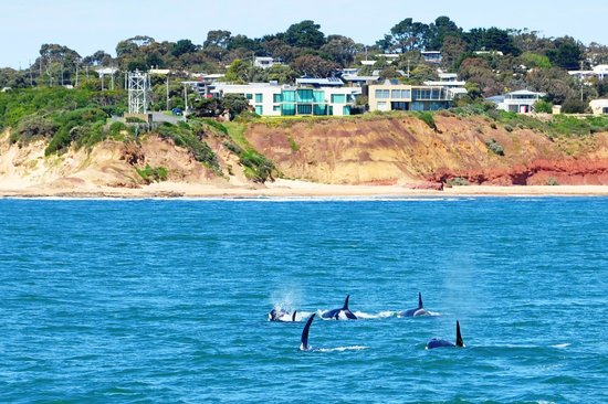Where To See Whales At Phillip Island Victoria