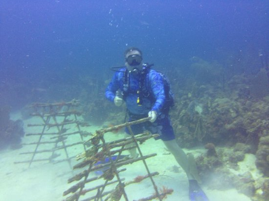 Diving Dominican Republic: Old Muskets