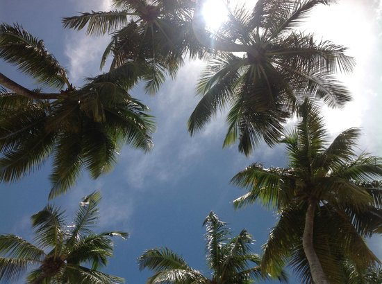 Dreams La Romana Resort & Spa: view up from my beach chair