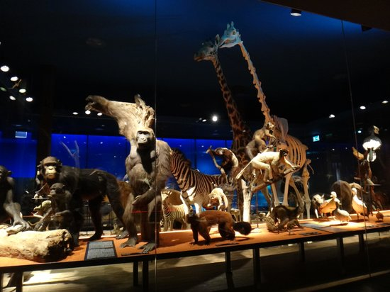 Musee d'histoire naturelle Fribourg