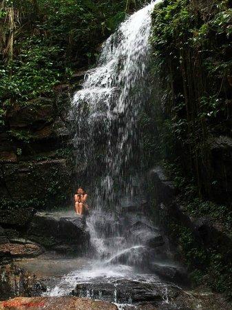 Tijuca National Park : Waterfall