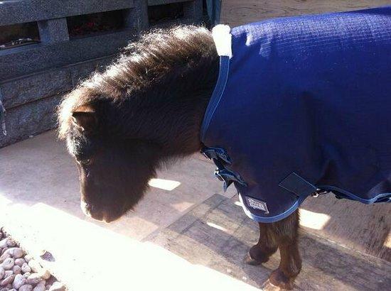 Kanda Shrine: 馬のあかりちゃん