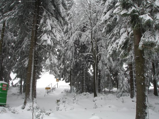 Hotel Wagner Die Kleine Zauberwelt: зимний лес