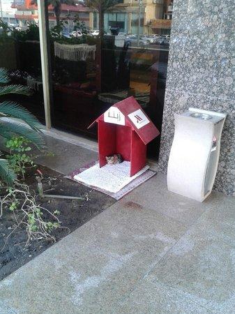 Jeddah Marriott Hotel: Room for the kitten