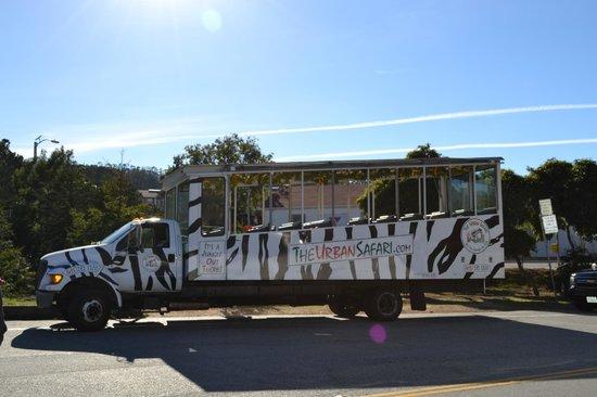 The Urban Safari: Tour Bus/Zebra