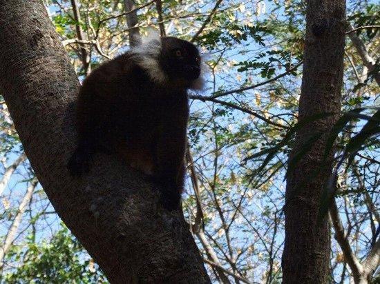 Orangea Village: Un makako libero nella foresta