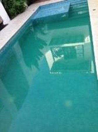 Bioma Boutique Hotel Mompox: Piscina agua verde