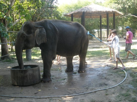 Wildlife Friends of Thailand: Now, if I could get him to wash the car