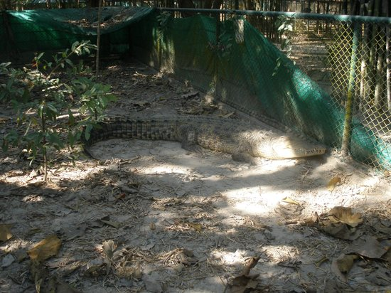 Wildlife Friends of Thailand: Smuggled in from Australia