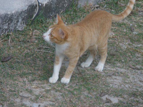 Wildlife Friends of Thailand: cute kitty