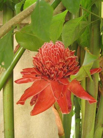 Elegant Lanna Boutique Guesthouse: цветочек в садике