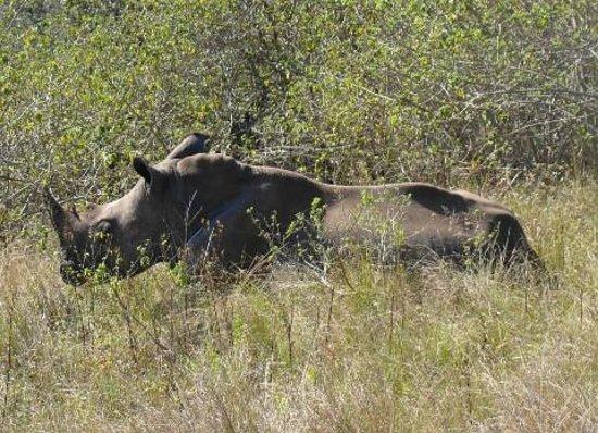 Gwahumbe Game & Spa : rhino close up