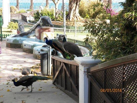 Marina d'Or Gran Duque 4*: jardines