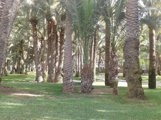 Hotel Riu Palace Oasis : gigantischer Palmengarten