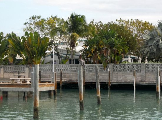 Seascape Motel and Marina : Pelicans on the dock at the Seascape Motel.