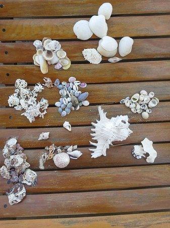 Anakao Ocean Lodge: Finding sea shells