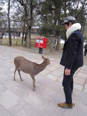 Tōdai-ji-Tempel: 사슴