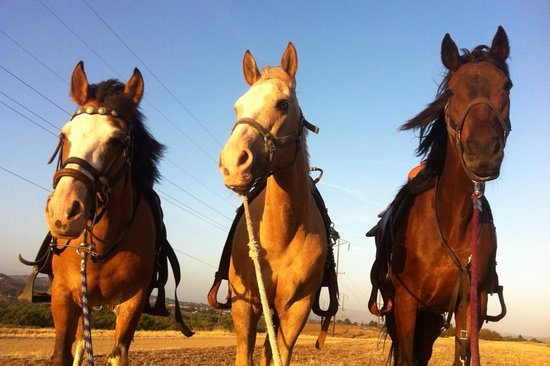 Norco, CA: The Horses of SunShine & DayDreams Love There Job and look forward to riding with you soon