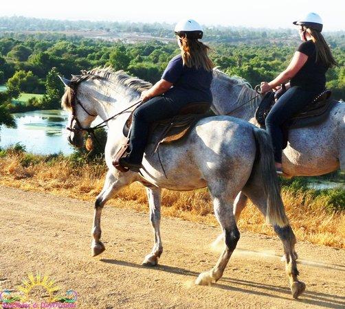 SunShine & DayDreams - Private Horseback Riding