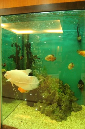 PJ Princess Regency: aquarium in the reception