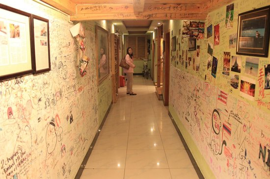 Teddy Bear Hotel: in hostel