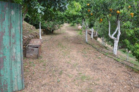 Rania Beach Hotel: Botanical park & gardens of Crete