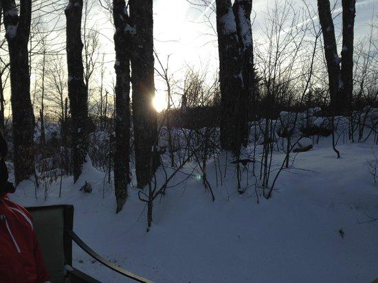 The Mountain Top Inn & Resort: forrest