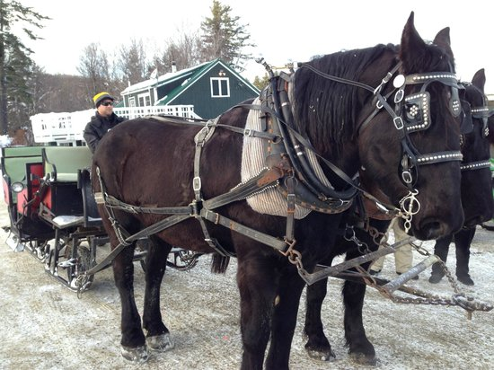 The Mountain Top Inn & Resort: horse sleigh ride