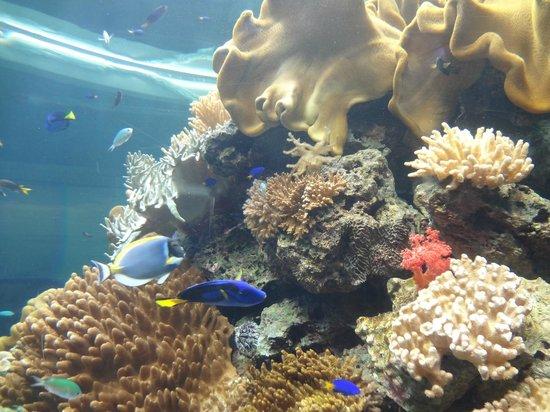 National Museum of Marine Biology and Aquarium: Marine habitat