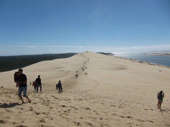 Ecolodge des Chartrons : La dune du Pyla n'est pas loin en voiture.