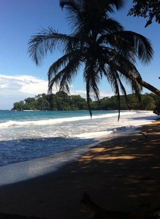 Cabinas Punta Uva : Strand